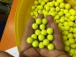 Preview: maincarp-baits - Custom Fluoro Pop Ups 12mm gelb